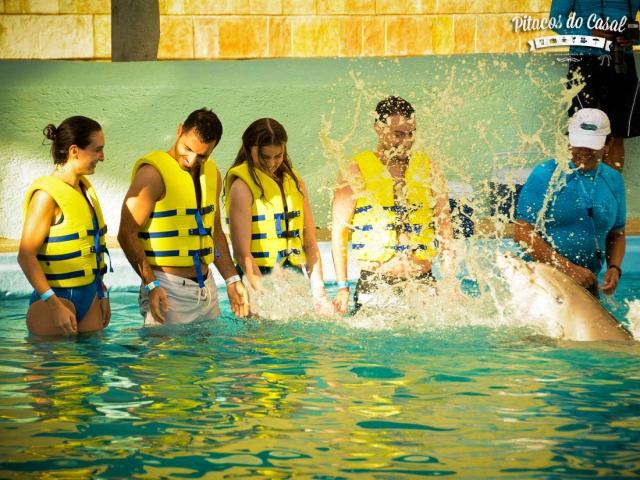 golfinhos cancun